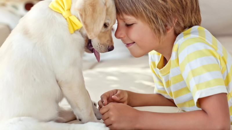 Можно ли завести собаку ребёнку, имеющему предрасположенность к аллергии?. 18015.jpeg