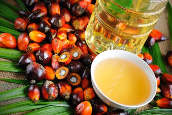 ВОЗ: производство пальмового масла как угроза здоровью и экологии. 17055.jpeg
