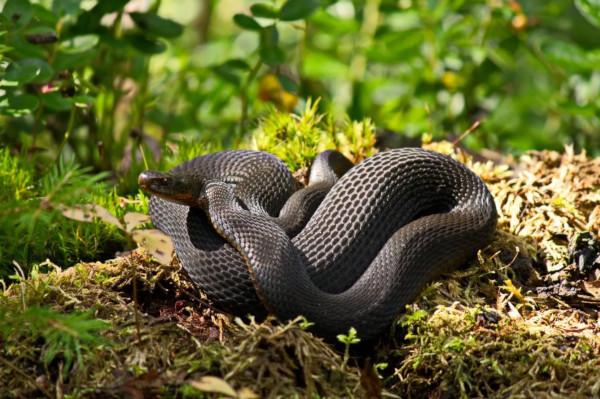 В МЧС рассказали, как не посинеть после укуса змеи. медицина, здоровье, врач, МЧС, змея, укус