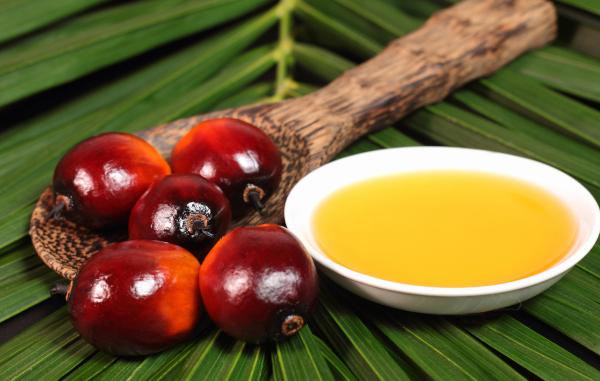 Роспотребнадзор рассказал о плюсах и минусах пальмового масла. медицина, здоровье, продукты, питание, пальмовое масло, Роспотребнадзор