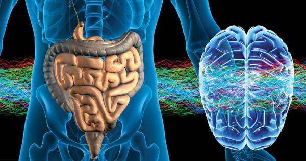Новые факты: гормон, участвующий в пищеварении, влияет на состояние мозга. 17244.jpeg