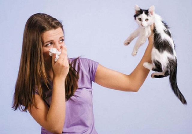 Насморк или аллергия?. 15275.jpeg