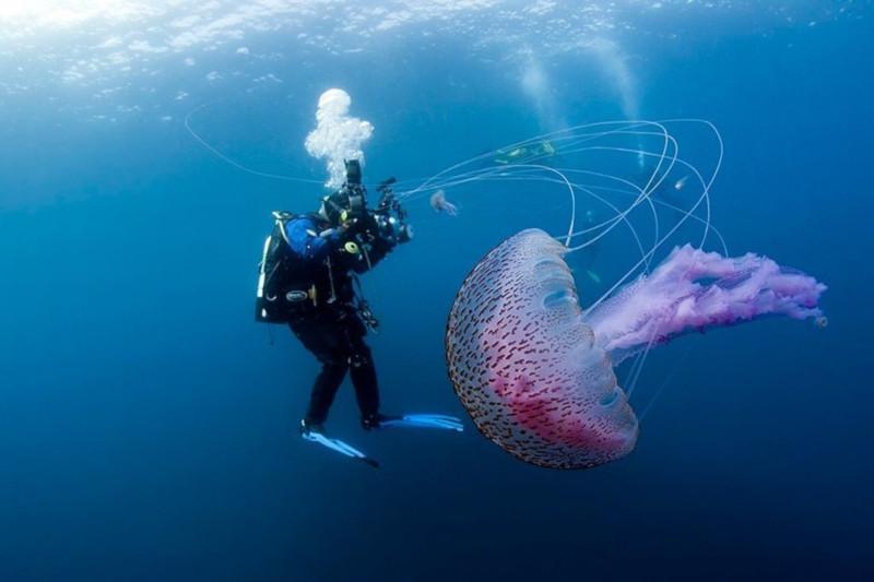 Противоядие нового поколения спасет от смертельного контакта с медузой. медицина, здоровье, противоядие, медуза