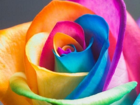 От всех бед избавит... цвет?. От всех бед избавит... цвет?