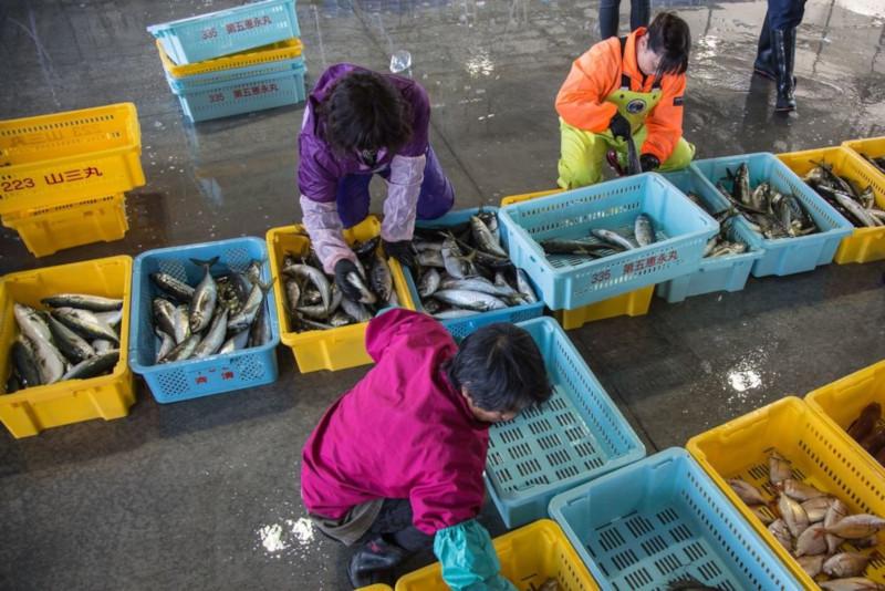 Рыбу и рис из Фукусимы хотят поставлять в магазины. медицина, здоровье, рыба, рис, Фукусима, Япония