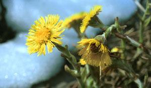Зеленая флора против осенних простуд. 7448.jpeg