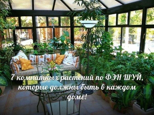 Семь комнатных растений по ФЭН ШУЙ, которые должны быть в каждом доме!