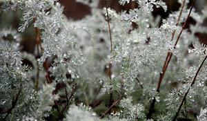 Лечебные травы употребляем с оглядкой. 7620.jpeg