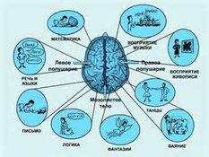 Мозг можно ставить на запись. мозг и память