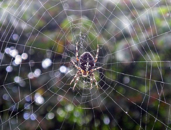 Арахнофобия: почему мы боимся пауков?