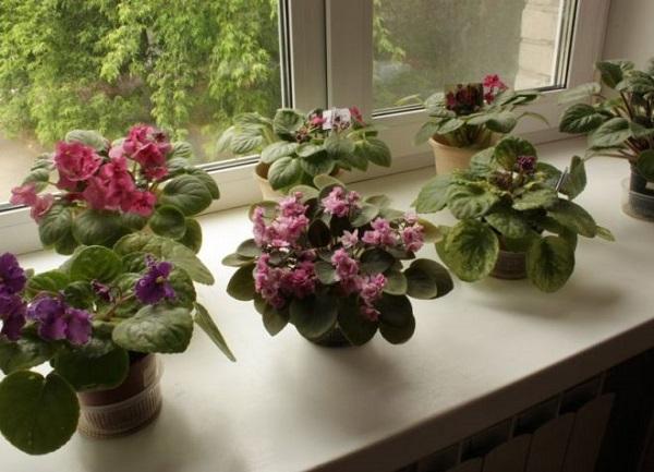 Цветы в доме по фен шуй. 14663.jpeg