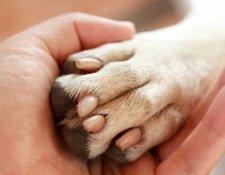 Собака оказала хозяйке первую медицинскую помощь. 9769.jpeg