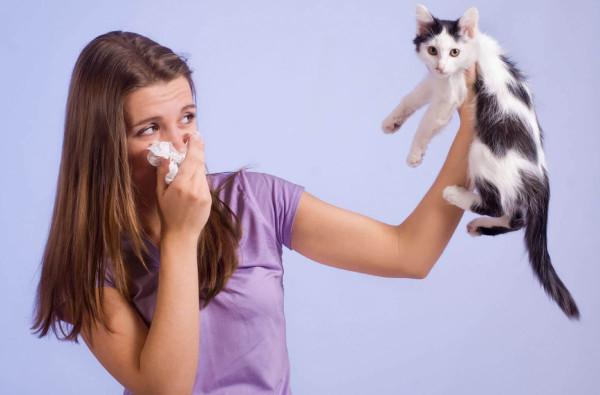 Российские и австрийские ученые разрабатывают вакцину от аллергии на кошек. 16826.jpeg