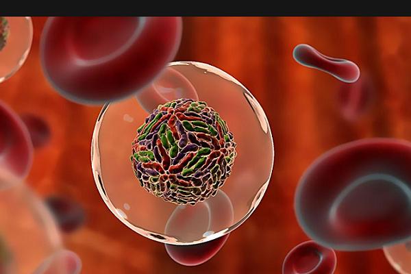 Если подружиться с кишечными бактериями, можно ли помочь своей иммунной системе процветать?. 16884.png