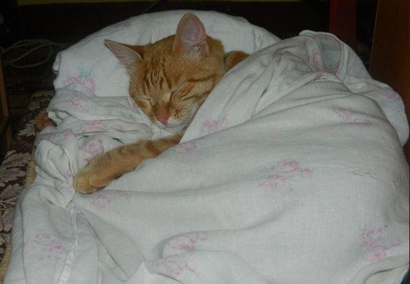Анатомия сна: что постелить, на что положить голову, чем укрыться. сон