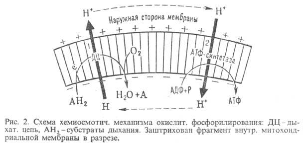https://www.medpulse.ru/image/encyclopedia/4/5/2/9452.jpeg