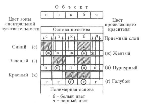 http://www.medpulse.ru/image/encyclopedia/7/7/6/15776.jpeg