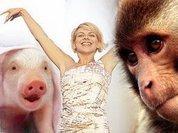 Человек – это плод любви свиньи и обезьяны?