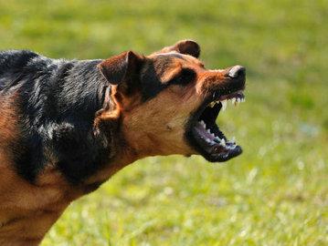 Что делать, если вас покусала собака