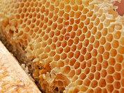 Пчелы – это далеко не только мед