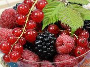 Летние ягоды: не только вкус