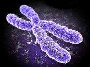 В чем загадки Y-хромосомы?