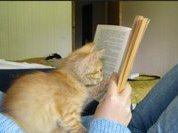 Учимся засыпать с правильной книжкой в руках