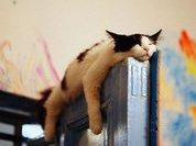 Подбираем подходящую позу для сна