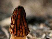 Собираем первые грибы в начале лета