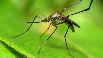 Кого чаще кусают комары, объяснили специалисты