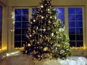 Новогодняя елка - живая или пластмассовая?