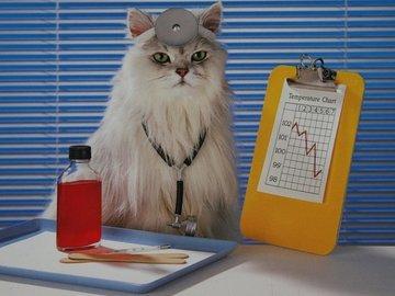 Кошки для здоровья