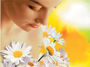 Ромашка - цветок в косметичке