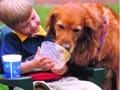 Эхинококкоз: когда собака становится врагом человека