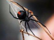 """Бразильские """"нейротоксиновые пауки"""" атаковали лондонцев"""