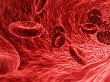 Гематолог Захаров назвал основные причины нехватки железа в организме