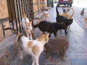 Стригущий лишай: зараза для людей и животных